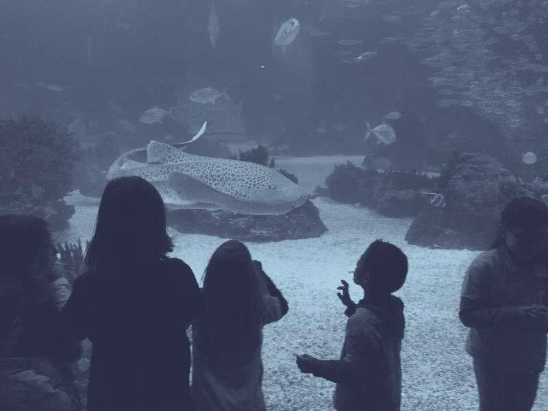 https://cococi.org/news/sortie-oceanarium-de-lisbonne/ Sortie Oceanarium de Lisbonne